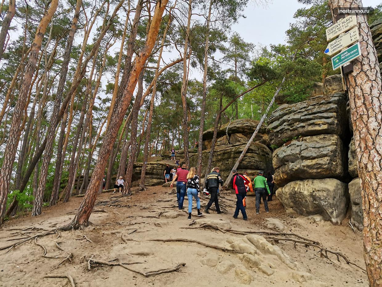 Туристические маршруты в чешских лесах