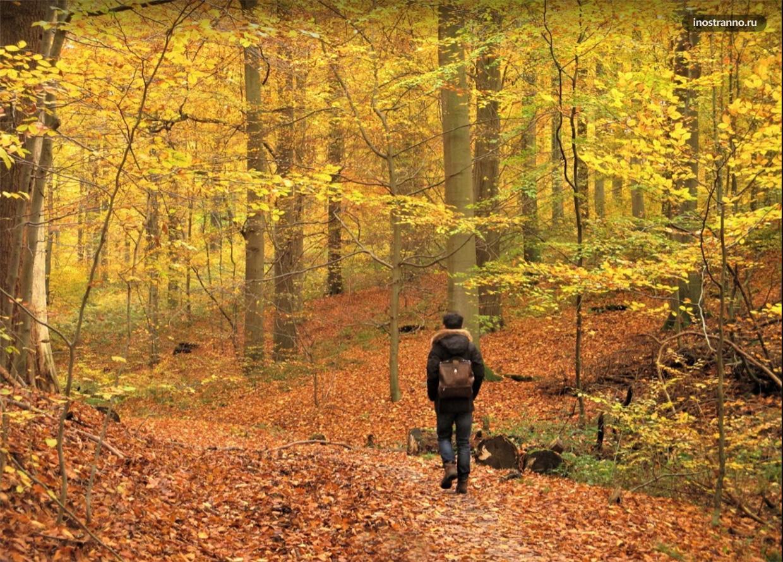 Суаньский лес в Брюсселе