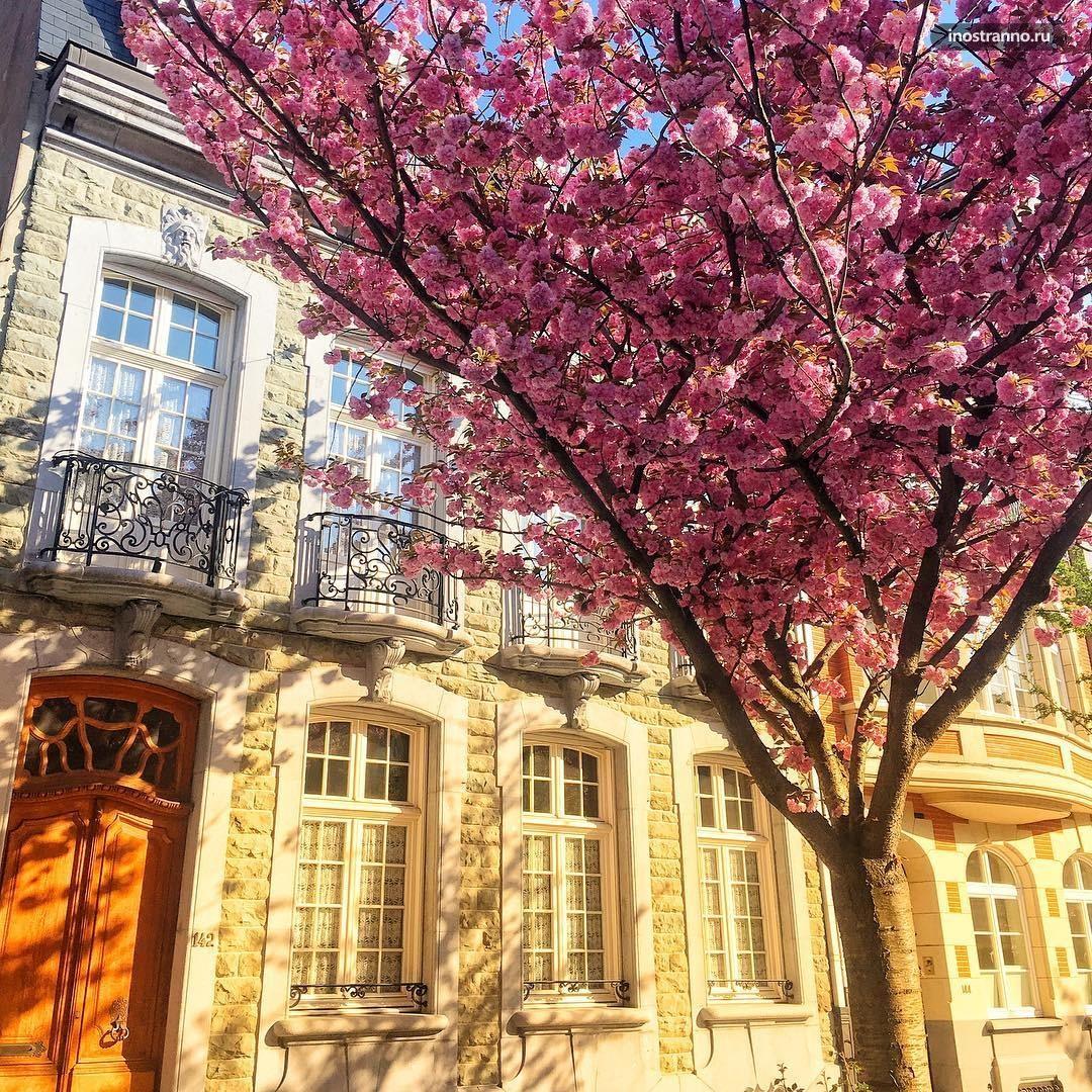 Адреса мест цветения сакуры в Брюсселе