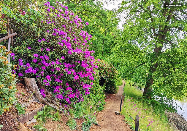 Чешская природа весной