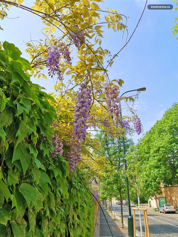 Сад в Праге