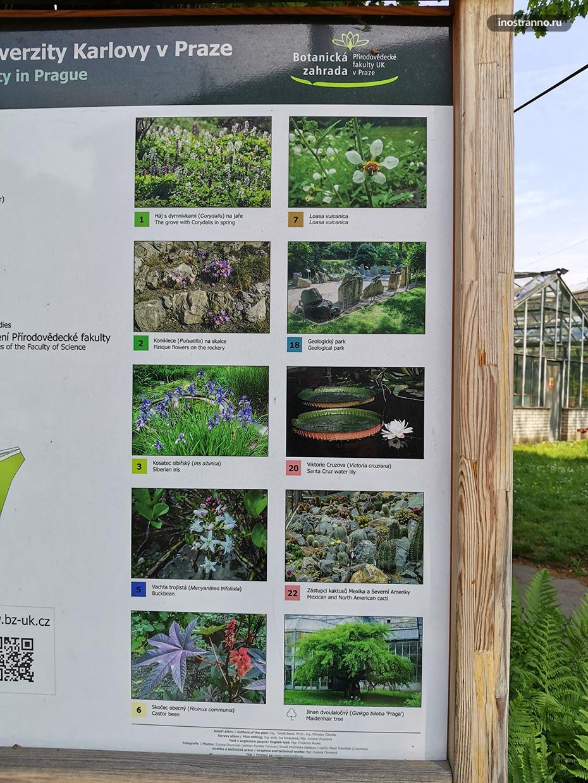 Информация о растениях в Ботаническом саду Праги