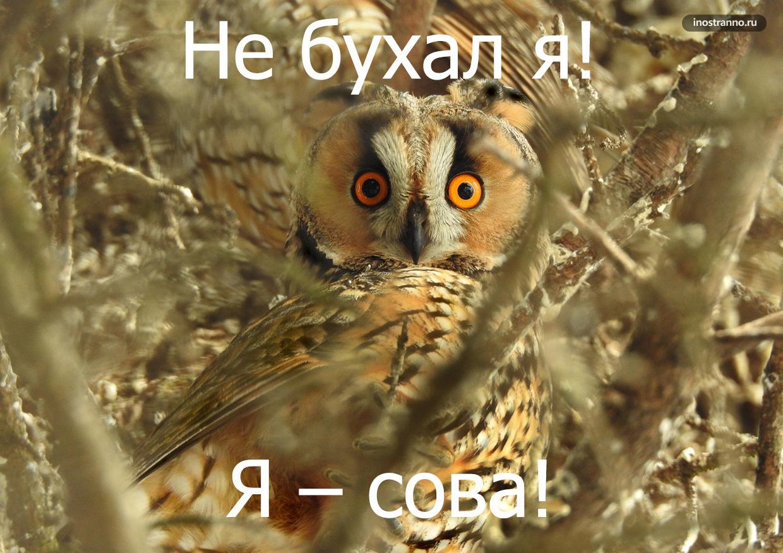 Смешные названия животных на болгарском языке