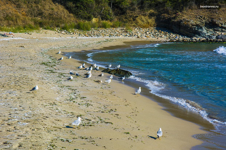 Чайки и нудистский пляж