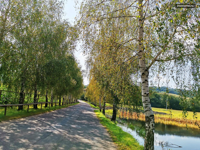 Деревья Чехии