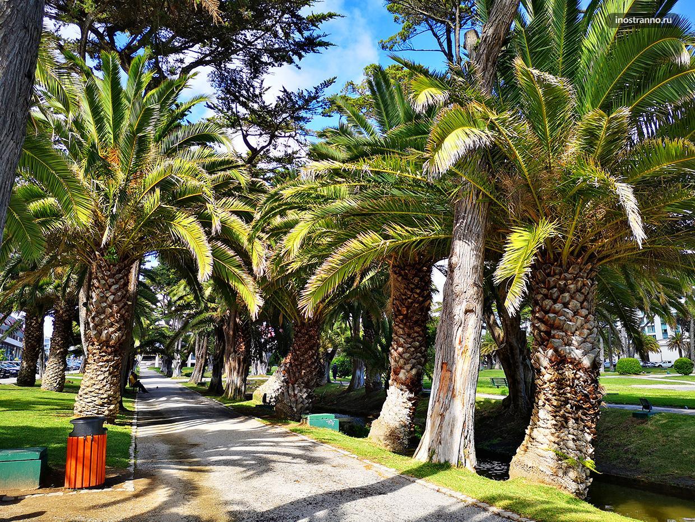 Пальмовые рощи на юге Европы