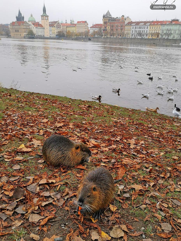Прага в октябре и ноябре