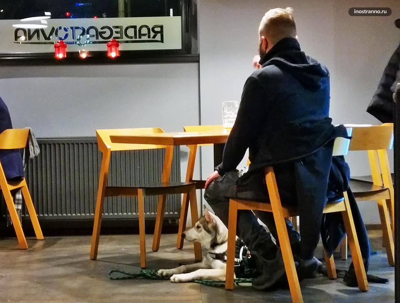 Чехословацкая волчья собака