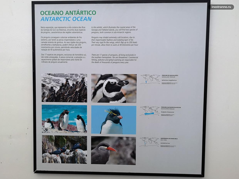 Пингвины и животные Антарктиды