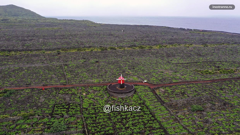 Виноградники острова Пику на Азорах