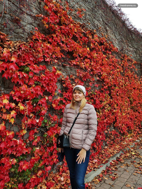 Место для осенней фотосессии в Праге с листвой