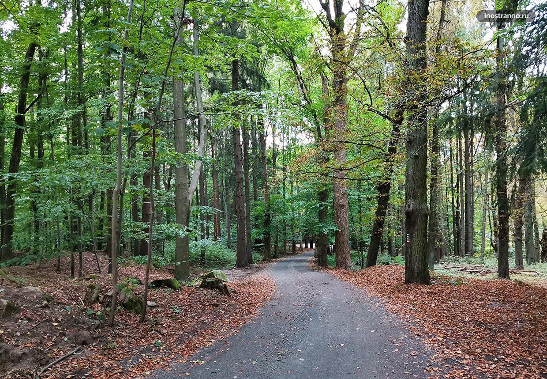 Лесная дорога в Чехии к замку