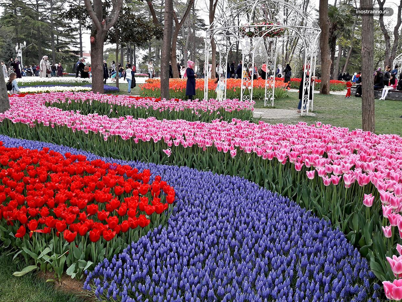 Эмирган парк тюльпанов в Стамбуле