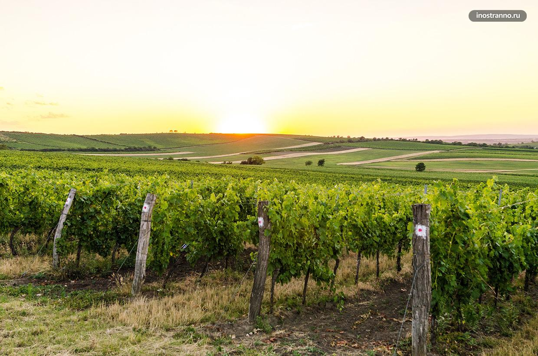 Моравские виноградники