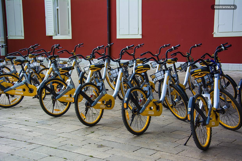 Прокат велосипедов в Черногории