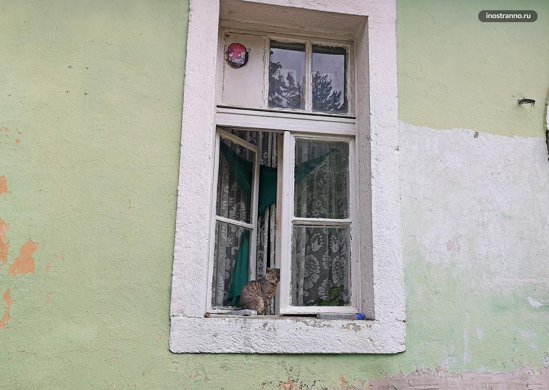 Кот в Черногории