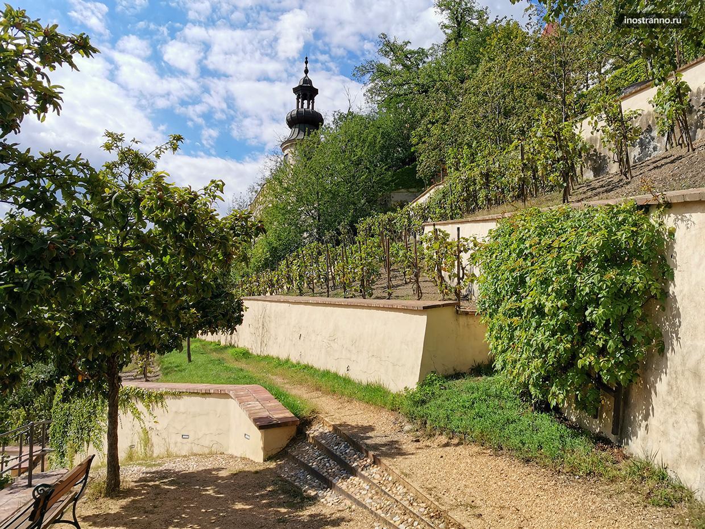 Виноградники в Чехии