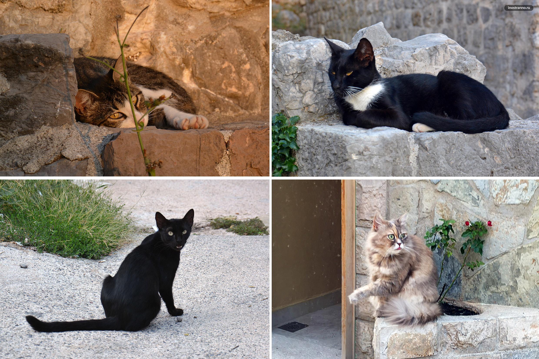 Кошки в Черногории