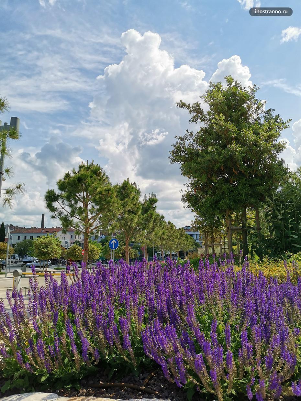 Лучший природный парк в хорватской Истрии