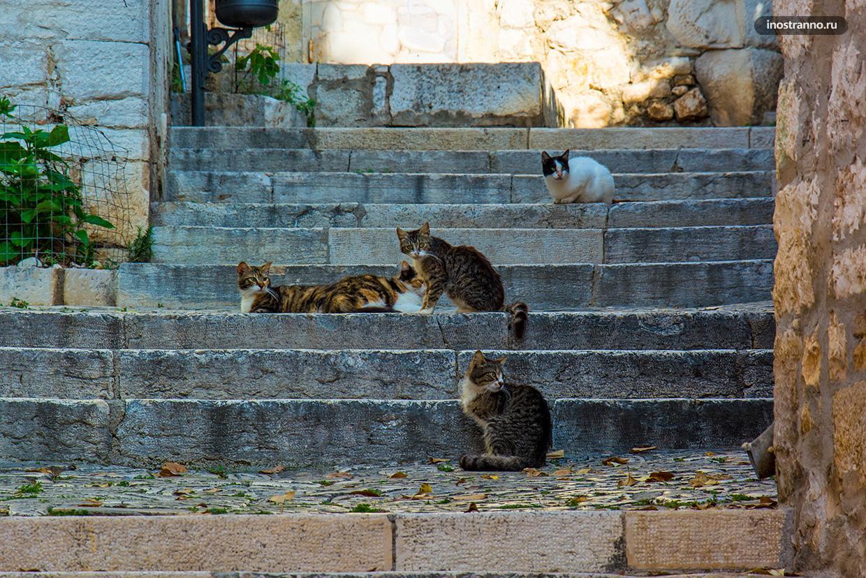 Ленивые хорватские коты